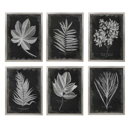 [325672] Foliage Framed Prints, S/6