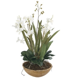 [286074] Moth Orchid Planter